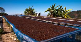 kaffeebohnen verarbeitung